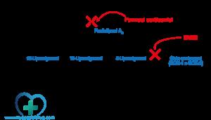 Corticosteroidi - Schema acido arachidonico