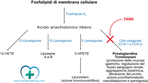 FANS - Schema acido arachidonico